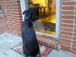Reggie waiting like a good boy for his girlfrend