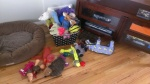 Reggie's hoard