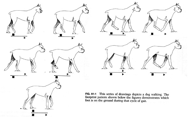 Tail Movements Of Big Cats Running