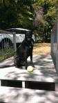 Ball instead...